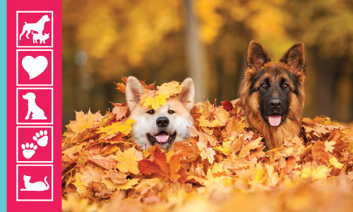 """""""Fall"""" For A Shelter Dog"""